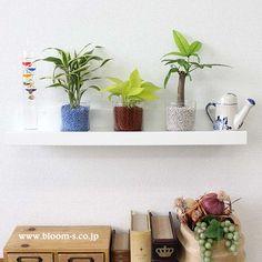 気軽にいろんな場所に飾って癒しの空間が作れるミニ観葉植物。ガラス容器から見える清潔感たっぷりの色とりどりのネオコールもとってもオシャレ♪ #観葉植物 #インテリア http://www.bloom-s.co.jp/fs/bloomingscape/hy-hgn73