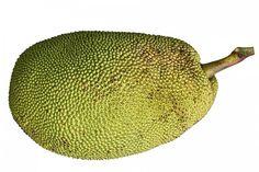 For fruits name in Hindi and English check here Fruits names Scientific names in red colour Apple, Pippin – (Malus domestica) Apricot – (Prunus armeniaca) Banana – (Musa) Black Currant – (Ribes nigrum) Blueberry – (Cyanococcus) Coconuts – (Cocos nucifera) Custard Apple – (Annona reticulata) Date – (Phoenix dactylifera) Fig – (Ficus carica) Gooseberry, Imlica – (Ribes uva-crispa) Grapes – (Vitis vinifera) Guava – (Psidium guajava) Jackfruit – (Artocarpus heterophyllus) …