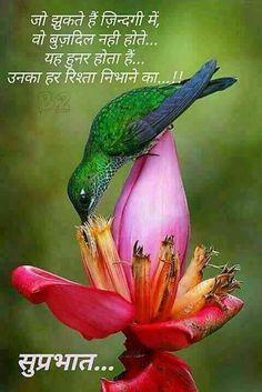 Good Morning Hindi Messages, Good Morning Wishes Quotes, Morning Prayer Quotes, Morning Thoughts, Morning Greetings Quotes, Morning Inspirational Quotes, Inspirational Quotes Pictures, Morning Prayers, Deep Thoughts