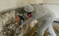 Mold Removal Companies http://asbestways.over-blog.com/2017/01/mold-removal-companies.html