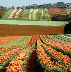 Little Island, Beautiful Stories, Tasmania, Vineyard, Landscapes, Scenery, Australia, Earth, Awesome