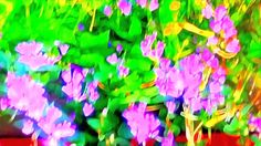 FLOWERPOWER  EASYJOY