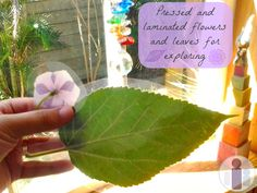Exploring nature on the light table in Spring. Pressed and laminated flowers and leaves #springbloghop #kbn