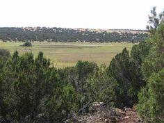 Photo 1 : 9D Silver Eagle CR's 8230 & 8220, Vernon, AZ 85940, US