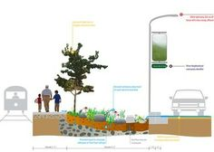 """America's """"greenest street"""" provides a blueprint for sustainable urban development 