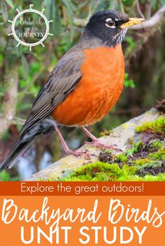 Kids Will Love Studying The Birds In Their Own Backyards With This Fun Study It