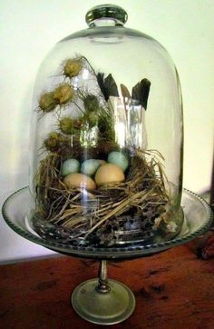 Easter has come around one more time again and I decided to use just a few things from nature to create a couple of Easter vignet. Glass Dome Display, Glass Domes, The Bell Jar, Bell Jars, Apothecary Jars Decor, Cloche Decor, Steampunk Accessoires, Creation Deco, Decorated Jars