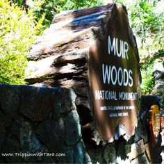 Muir Woods - Redwoods, California