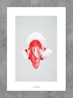 Morbid Being N° 5 - Bienvenue Publishing - Shop Indoor Pond, Goldfish, Fascinator, Peonies, Rooster, Symbols, Concept, Display, Prints