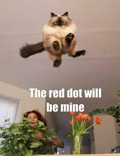 Funny Animal Pictures - View our collection of cute and funny pet videos and pics. New funny animal pictures and videos submitted daily. Cool Cats, I Love Cats, Funny Cats, Funny Animals, Cute Animals, Funny Troll, Animals Dog, Funny Cat Pictures, Animal Pictures