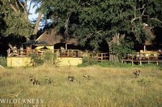 The Wilderness Way – a brief history Humble Beginnings, 30 Years, Conservation, Wilderness, Safari, Africa, History, Image, Into The Wild