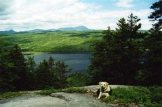 Hike all or part of the Appalachian Trail with your dog!