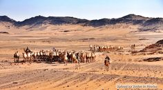 Camel trek, Northern State  الترحال بالجمال، ولاية الشمالية  (By Achim Fried)  #sudan #desert #northern