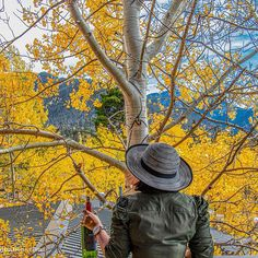 Chirasree Banerjee (@travelrealizations) • Instagram photos and videos. Fall colors in #Colorado #Travel #Usinterior #autumn Colorado, Photo And Video, Amazing, Travel, Instagram, Voyage, Aspen Colorado, Viajes, Traveling