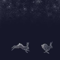 Hares Under Stars by CatherineIllustrate on Etsy