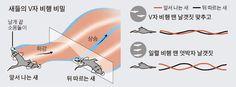곤충 비행 - Google 검색