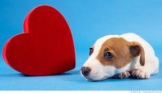 I heart Valentine's Day #dog #valentine