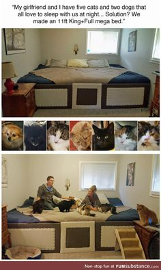 """My girlfriend and I have five cats and two dogs that all love to sleep with us at night. We made an 1111 Krng+FulI mega bed,"" - iFunny :) Animal Memes, Funny Animals, Cute Animals, Gato Animal, Two Dogs, My New Room, Me As A Girlfriend, Dog Cat, Funny Pictures"