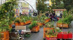 Urban Gardening ist sinnvoll und spaßig | NDR.de - Ratgeber - Garten