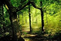 Image result for forests in lord of the rings