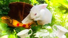 These Stunning 'Alice in Wonderland' Themed Photos Give New Life to Rescued Lab Animals