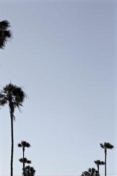 Urban Jungle. LA. CA. USA.
