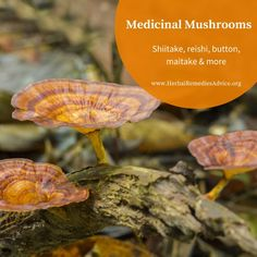 Herbal and Medicinal Mushrooms