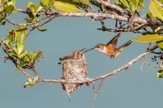 Bahama Woodstar Hummingbirds / by Lorraine Minns