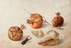 pittore olandese del XVII sec. natura morta - Giovanna Garzoni