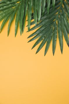 Lush leaves on yellow background Free Photo Leaves Wallpaper Iphone, Plant Wallpaper, Aesthetic Iphone Wallpaper, Screen Wallpaper, Aesthetic Wallpapers, Wallpaper Backgrounds, Brick Wallpaper, Photo Backgrounds, Iphone Bleu