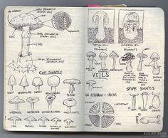 Year of the Mushroom - art journal nature sketchbook