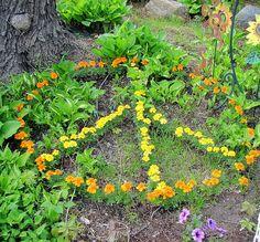 Marigold Peace Sign