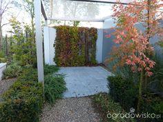 Ogród tworzę nowoczesny czyli wewnętrzna walka jak nie zostać kokoszką :) - strona 8 - Forum ogrodnicze - Ogrodowisko