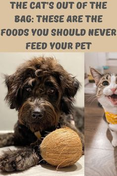 Whether your dog or cat is begging for food or sitting quietly while you're enjoying dinner with your family, it's always tempting to give them table scraps. But before you do, think twice as there are foods that are aren't healthy and some are even poisonous and deadly to pets. Top Tattoos, Sleeve Tattoos, Thumb Tattoos, Engagement Mehndi Designs, Romantic Wedding Receptions, Discreet Tattoos, Asian Wedding Dress, Aloe Vera Face Mask, Stylist Tattoos