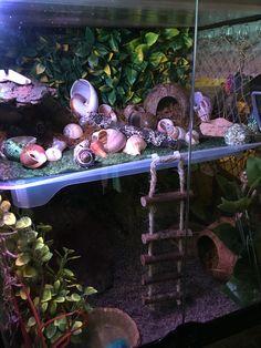Hermit Crab Cage, Hermit Crab Homes, Hermit Crab Habitat, Hermit Crab Shells, Hermit Crabs, Reptile Rescue, Garden Snail, Crab Decor, Betta Aquarium
