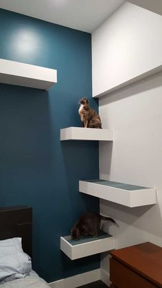 I built some cat shelves - Imgur