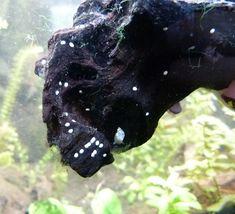 Points Blancs Sur Decor Aquarium