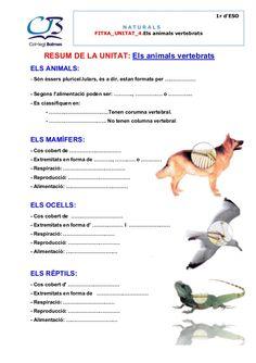 1r d'ESO NATURALS FITXA_UNITAT_4.Els animals vertebrats RESUM DE LA UNITAT: Els animals vertebrats ELS ANIMALS: - Són éss... Natural, Kids, Animals, Crafts, School, Vertebrates, Activities For Kids, Science, Reading