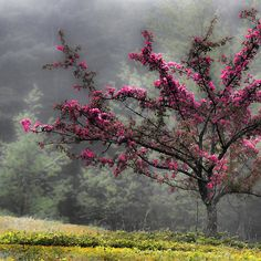 ~~ Apple Blossoms - Looking Back at the Beauty of Spring ~~
