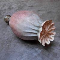 Céramiques végétales, sculptures de graines de terre test