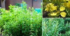 9 especias que puedes cultivar en tu hogar