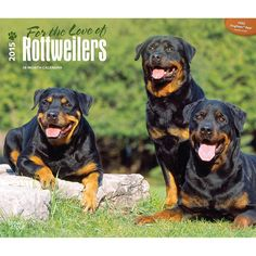 Rottweiler 2015 dog and puppy calendars ~ several styles available ~ the perfect inexpensive gift for all the dog lovers on your list ~ http://www.doggiechecks.com/calendars/Rottweiler.php