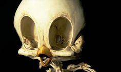 Animatus, realistische skeletten van stripfiguren