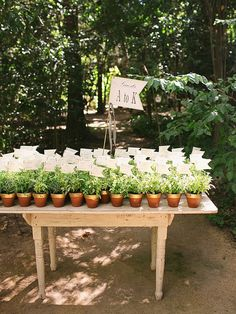 Potted plants for a rustic wedding favor idea