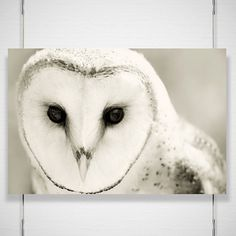 Winter Owl Photography Whiter Shade of Pale 8x12 by jpgphotography, $26.00