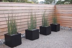 aménagement-extérieur-graminées-jardinières-minimalistes-palissade-bois