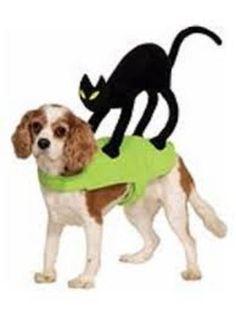 petco halloween superhero boy dog costume all dogs the time