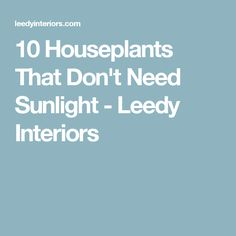 10 Houseplants That Don't Need Sunlight - Leedy Interiors
