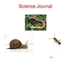 Science Journal Name Primary Science, Science Biology, Teaching Science, Teaching Art, Primary School, Teaching Ideas, Australian Curriculum, School Classroom, Mini Beasts