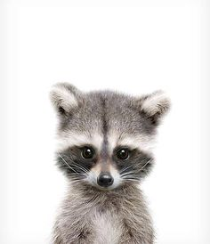 Have a good evening! #GoodEvening #Raccoon